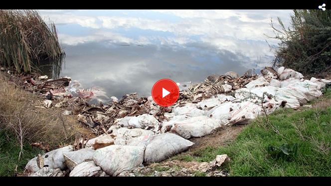 Adana'da Yüzlerce At Ve Eşek Kafası İle Kemikleri Bulundu