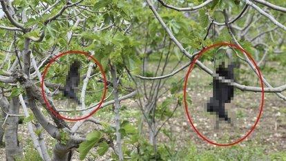 Bursa'da korkunç olay! Tüfekle vurulan kargalar ağaca asıldı