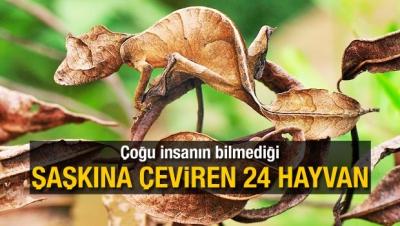 Çoğu İnsanın Bilmediği Şaşkına Çeviren 24 Hayvan