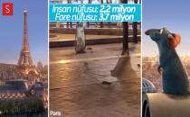 Disney'in Filmi Gerçek Oldu: Paris'i Fareler Bastı!