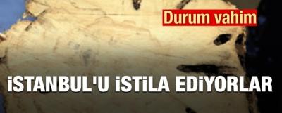 Durum vahim... İstanbul'u istila ediyorlar