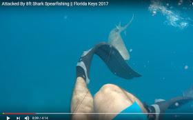 GoPro ile Kaydedilen, Dev Köpekbalığının Dalgıca Saldırı Anı!