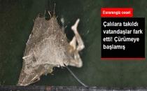 Manavgat'ta Sulama Kanalında Çürümüş Erkek Cesedi Bulundu