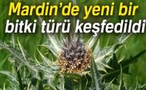 Mardin'de Yeni Bir Bitki Türü Keşfedildi!