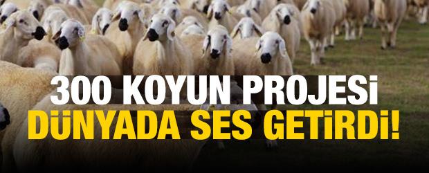 300 koyun projesi dünyada ses getirdi!