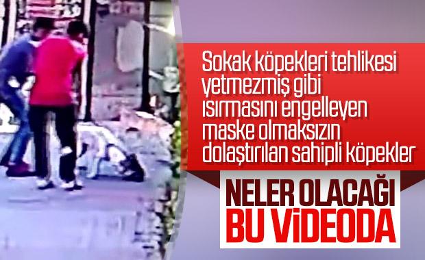 İstanbul Küçükçekmece'de pitbull dehşeti! Yavru kediyi saniyeler içerisinde parçaladığı an kamerada...