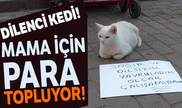 Bursa'da Dilenci Kedi Tekir, Doğacak Yavruları İçin Pankart Açıp Dileniyor
